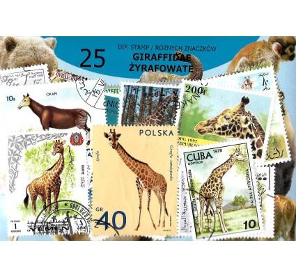 Pakiet filatelistyczny ŻYRAFOWATE 25 znaczkow