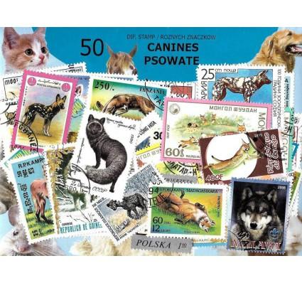 Pakiet filatelistyczny PSOWATE 50 znaczkow