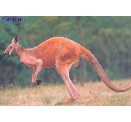 Znaczek Australia  Mi 1 Całostka pocztowa